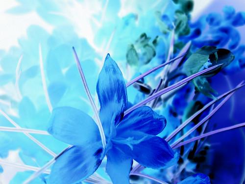 Magical Beauty by chiiidem.