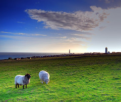 030307 Sheep at Portland Bill (petervanallen) Tags: light sunset lighthouse green bird silhouette portland bill nikon sheep observatory handheld hdr portlandbill photomatix birdobservatory d80 3exp nikond80
