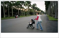 coconut boulevard, ntnu