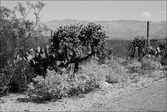 USA 2004 (ghostwriter71) Tags: arizona tucson saguaronationalpark