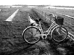 Lone Beach Bike