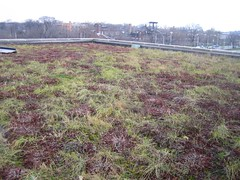 green roof at CCGT (kristen60647) Tags: sedum greenroof chicagocenterforgreentechnology