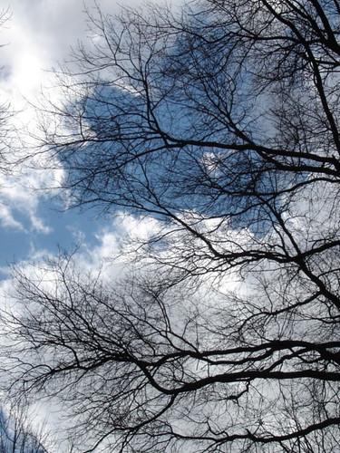 central park sky