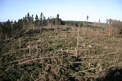 Windthrow (dididumm) Tags: wood storm tree forest destruction damage nrw holz wald baum kyrill sauerland sturm zerstörung schaden windbruch windthrow