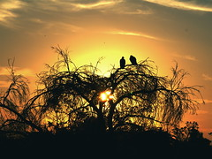 Vultures watching the Everglades Sunset 2 - by MrClean1982