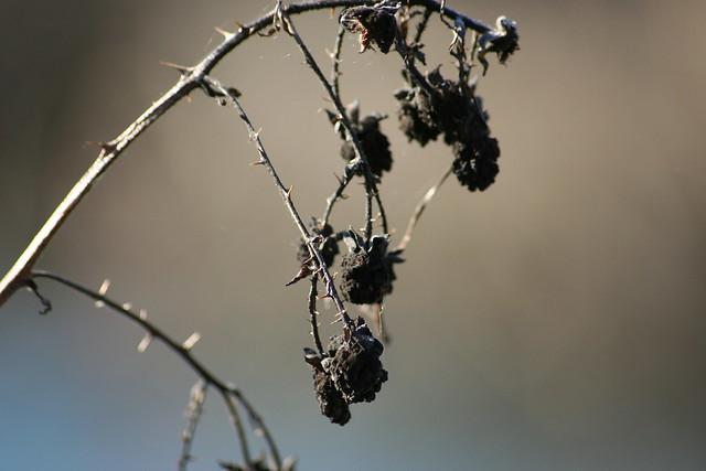 Dead Berries