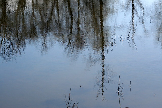 The Reflected Trees