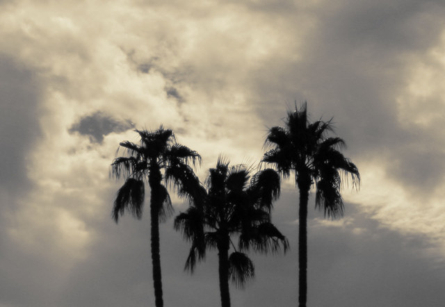 Three Palms with Yellow Clouds