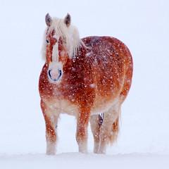 Thing1 - horse mckinstryhillgang shots masterpiecesoflightdark gang blondie hill vermont akablondie karmafavorite mckinstry a.k.a.