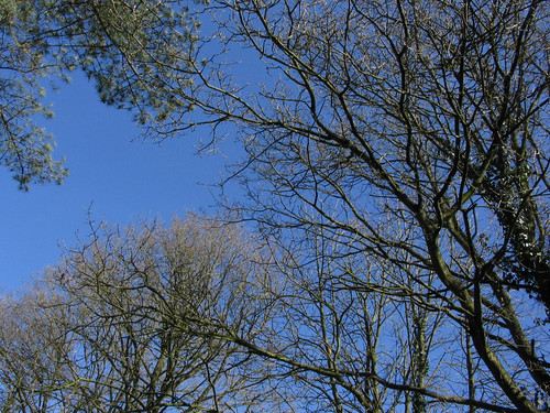 Trees and a Blue Sky - 17/03/07