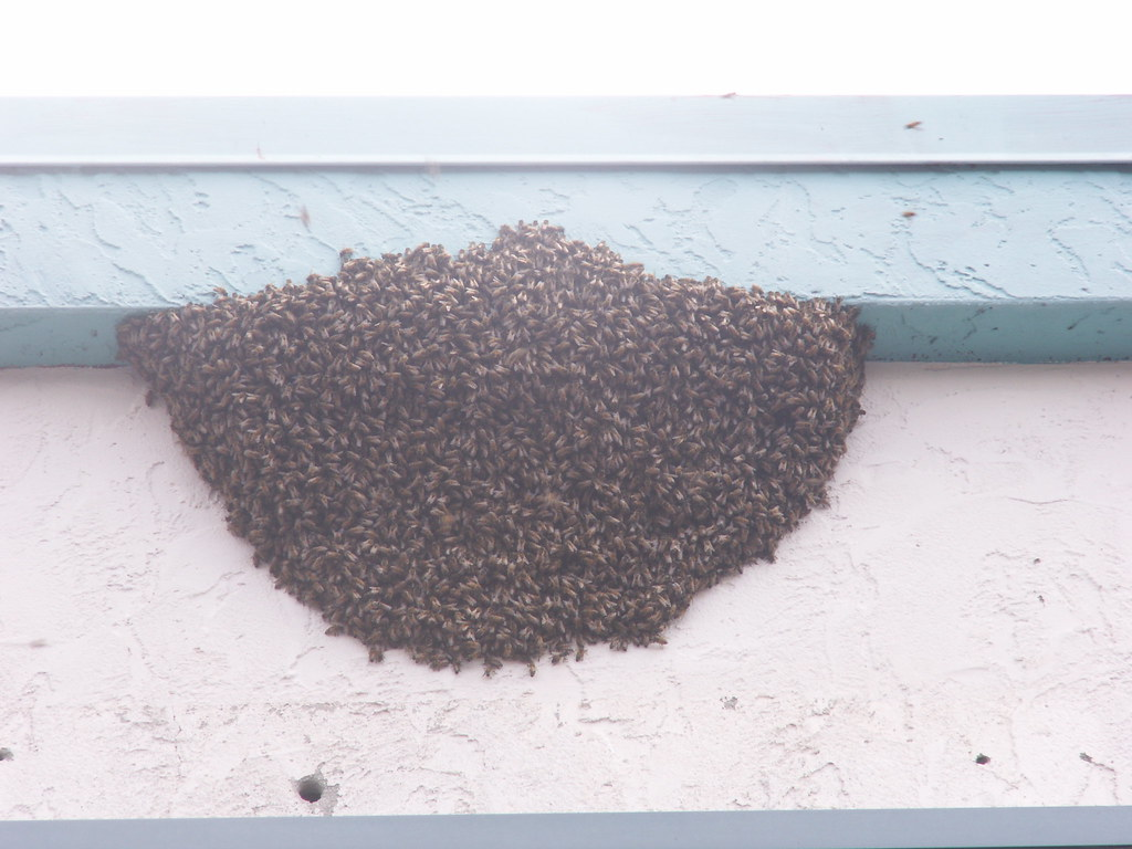 Bee Swarm at the Strip Mall