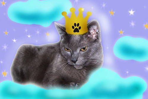 Simone: Goddess of Gray Cats
