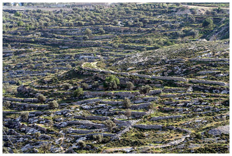 Terraces near Bethlehem