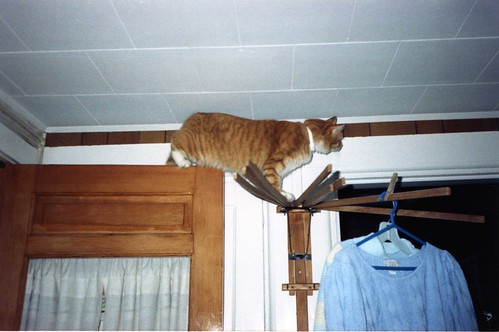 How did he get up there?
