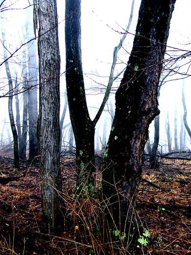 Margaret's woods