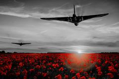 POP045 (Smart Aviation Art) Tags: poppy poppies poppyfield poppyfields lancaster vulcan avro spitfire hurricane aircraft military bbmf