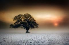 Winter Fog Breaking