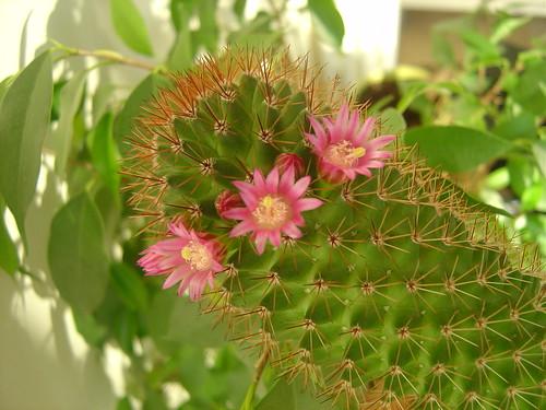 çiçeklenmek