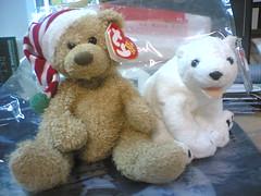 meet aurora the polar bear!