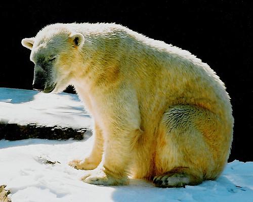 Động vật máu nóng có ưu điểm gì hơn so với máu lạnh?
