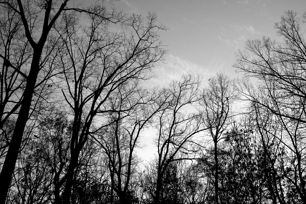 winter trees ©2006 RosebudPenfold