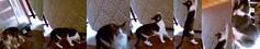 208 (supermiagolator) Tags: cats cat felini gatto gatti miaooo vespina miciozzi