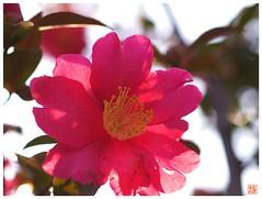 Flower 070108 #05