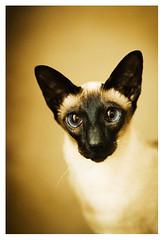 01.10.07: I swear I´m not a crazy cat lady