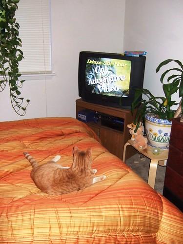 The Cat Adventure Video