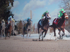 last curve in the Woodlawn Invitational Cup (lensjockey) Tags: art collage  holly horseracing van photocomposite lensjockey hollyvanvoast thewoodlawninvitationalcup voast idrathernotputbigwatermarksandcopyrightstuffonmypictures hollyvanvoastlensjockey