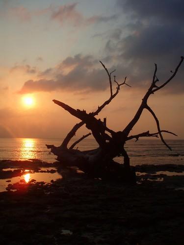 Sunset elephant beach