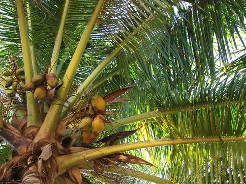 resting palms