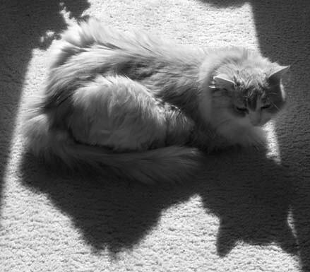 Temi&shadow