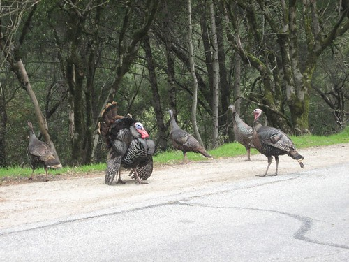 Dinner Crossing the Road