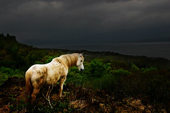 Image of Berra Peninsula Ireland (Karnevil) Tags: ireland horse animal bravo helluva anawesomeshot colorphotoaward impressedbeauty superbmasterpiece berrapeninsula