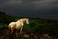 Image of Berra Peninsula Ireland (Karnevil) Tags: ireland horse animal bravo helluva anawesomeshot colorphotoaward impressedbeauty superbmasterpiece berrapeninsula