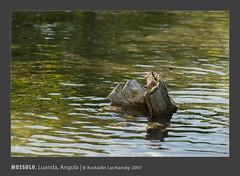 _KDL3931 (AIB - Angola Image Bank por KODILU Fotografia) Tags: ocean sea topf25 topv111 mar topf50 topv555 topv333 topv1111 angola luanda mangrooves mussulo mangais angolaemfotos angolaimagebank kodiluphotography angolainphotos wwwangolaimagebankcom