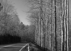 Tunnel Vision (K. W. Sanders) Tags: road trees sky blackandwhite bw geotagged pavement patterns canon20d alabama tunnel 321 1on1 parallellines canon1740mmf4l 123bw napg