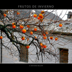 FRUTOS DE INVIERNO (Antonio Belln - Canalla Project) Tags: espaa rural ilovenature spain bravo photographer village nevada pueblo sierra photograph granada mostinteresting antonio fotografo alpujarras naturesfinest outstandingshots bellon mywinners abigfave impressedbeauty wowiekazowie top20green diamondclassphotographer antoniobellon mostrelevant tribesandhya thegardenofzen top20autumn canallaprojectcom
