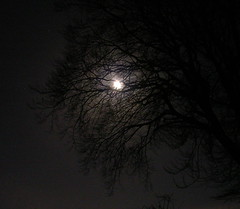 Moon and Tree (Mockney Rebel) Tags: moon tree night dark nikoncoolpix3200 againstflickrcensorship