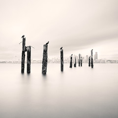 (brianchapman) Tags: seattle city longexposure urban water birds cormorants washington quality alki pilings magicdonkey