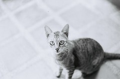 Southern Cat (RCM273TH) Tags: bw kitchen cat thailand 50mm pentacon praktica 100asa tarutao fomapan mtl5b thailand06