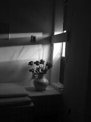 ando to  flor da pele.. (Anitah) Tags: flowers light shadow blackandwhite bw sunlight flores window pb pretoebranco dentista zecabaleiro luzdosol anitah anages flordapele