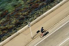 bike cruising in front of evans bay