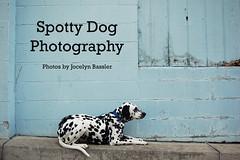 SpottyDogPhotography