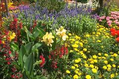 ליבלוב בגינה של קייטי