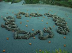 skippy-pumpkins