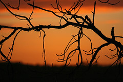 Remains of the day (abstract_effects) Tags: light sunset colour silhouette mar mood branches atmosphere wfc 2007 northwales gogleddcymru abstracteffects superbmasterpiece