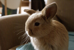 Bunny (Sjaek) Tags: cute rabbit bunny furry sweet adorable fluffy bun