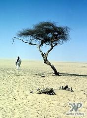 tree-tenere